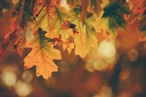 herfst blad najaar