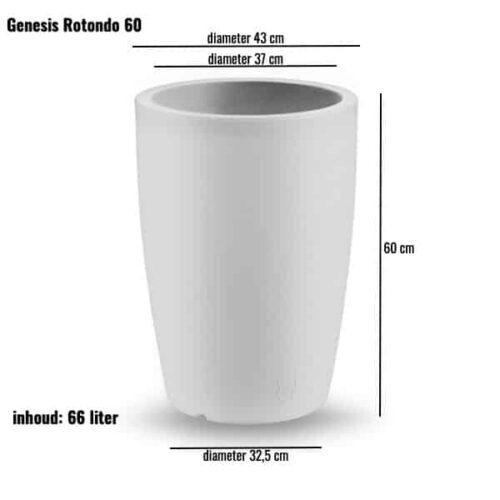 Genesis rotondo